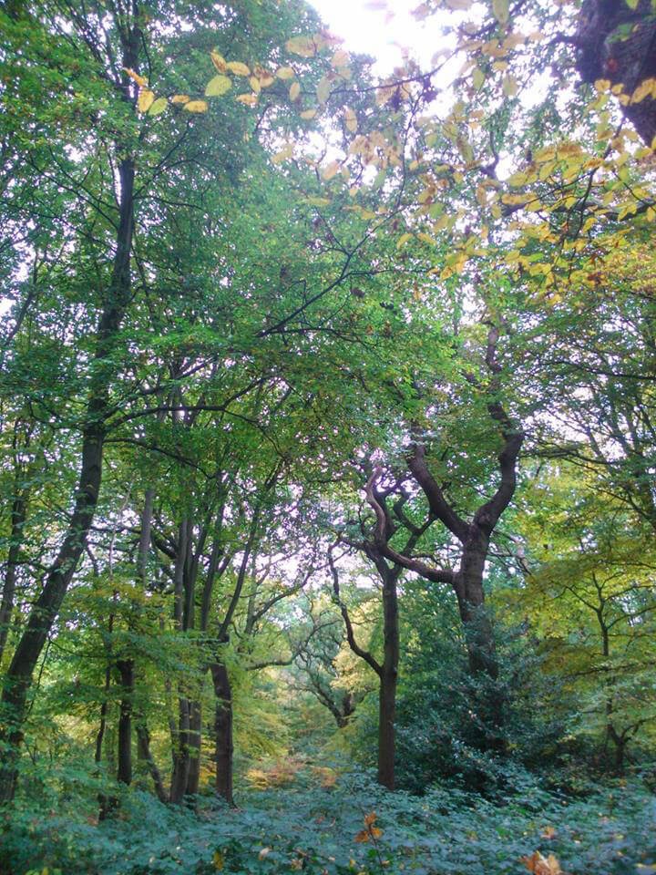 London treescape, Arthur and Marthas Dog Service