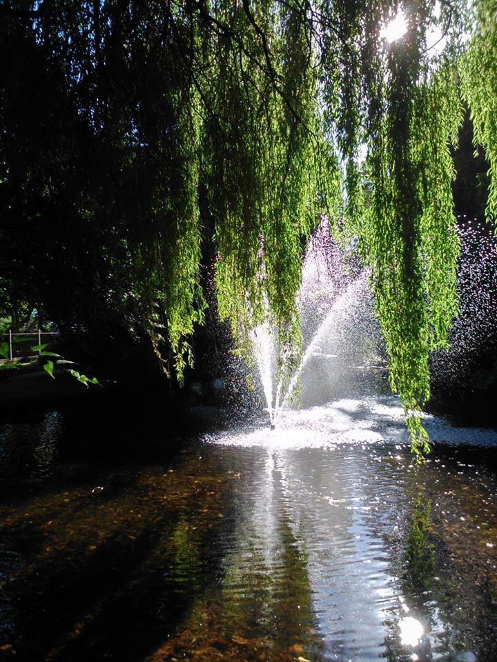 Morning sunshine New River Walk, London N1, Arthur and Marthas Dog Service