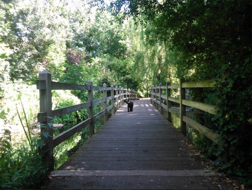 New River Walk, London through the eyes of a dog walker