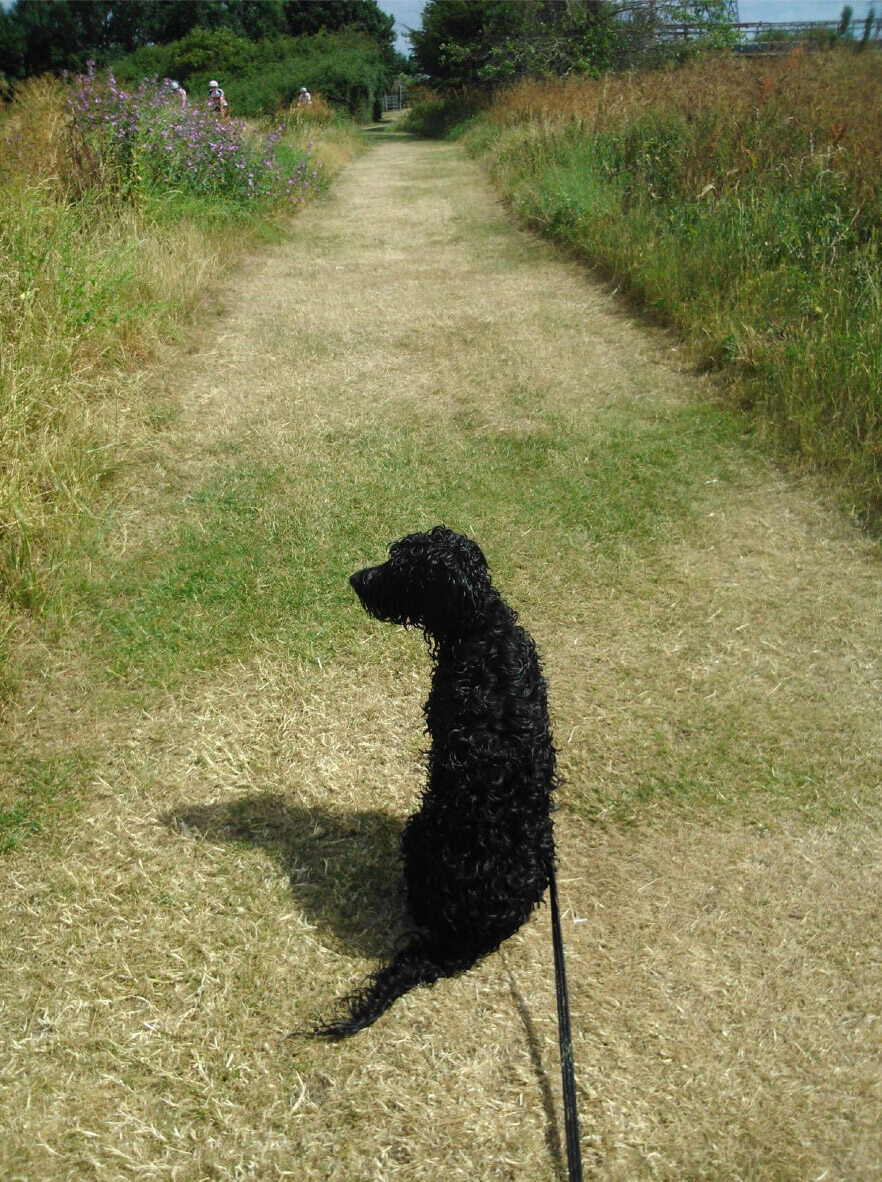 London dog walking, Arthur and Marthas Dog Service