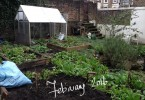 Clearing my veg plot, February 2016