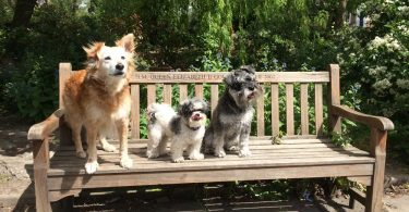 3 dogs sitting on a park bench