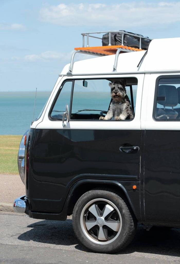 Schnauzer sitting in a classic camper van window
