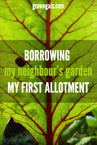 My first attempt at an allotment in a a neighbour's garden