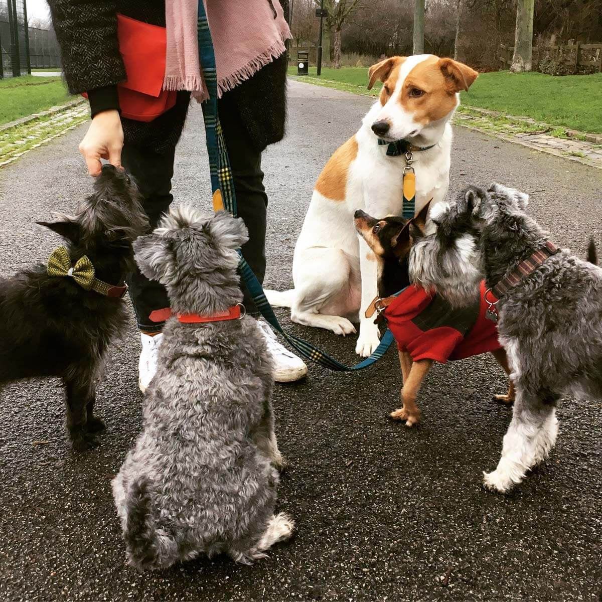 Ricci and friends are well behaved when dog treats are on offer