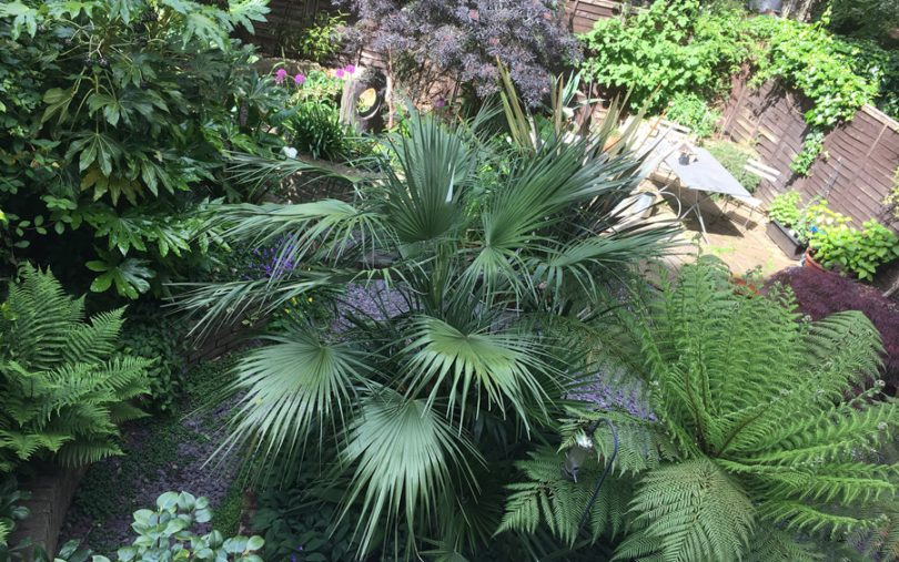 Making the most of a small shady garden