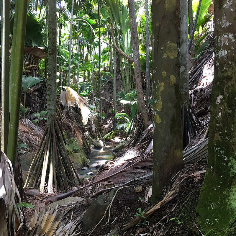 Vallée de Mai palm forest nature reserve, Praslin, Seychelles